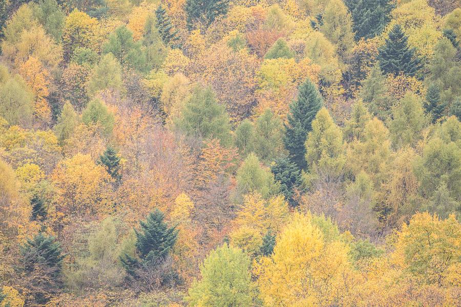 Boshelling in de herfst
