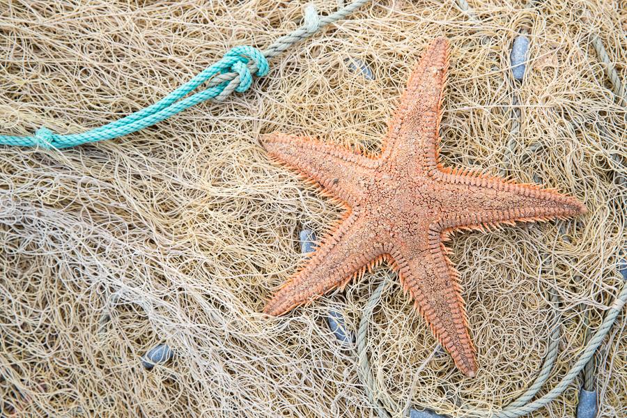 Zeester op vissersnet