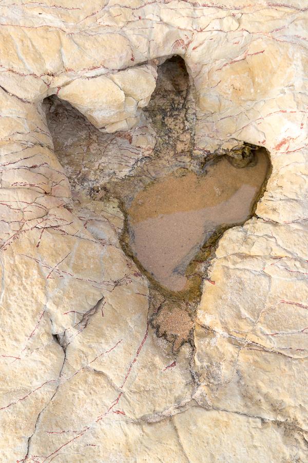 Spoorafdruk ornithopode dinosaurus