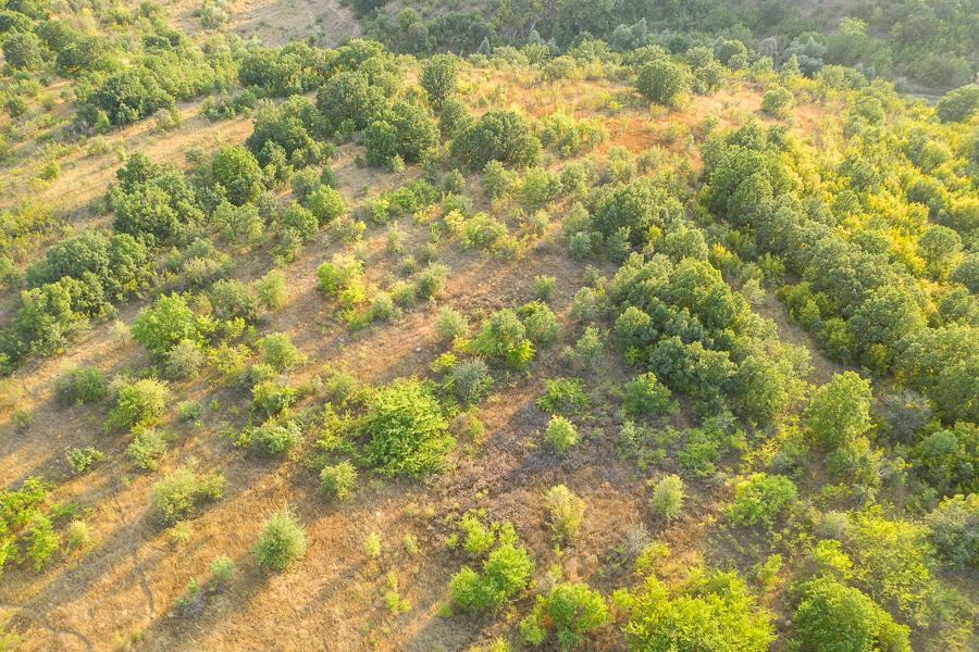 Habitat van de Ognevs slaapmuis (Myomimus roachi)