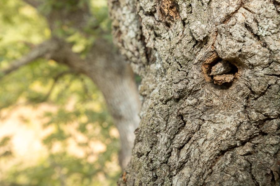 Natuurlijke nestopening van de Ognevs slaapmuis (Myomimus roachi). De opening dichtgemaakt met takjes.